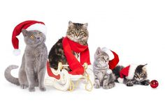 Cats In New Year