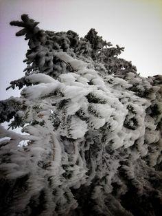 Eispanzer auf einem Baum in Zadni Telnice!!
