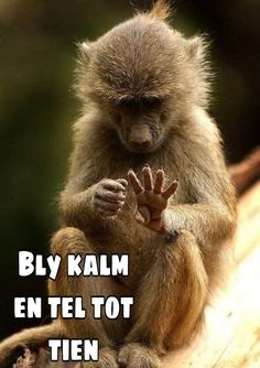 Afrikaanse Quotes, Goeie More, Family Photo Outfits, Special Quotes, Inspirational Thoughts, Cute Quotes, Funny Photos, Funny Animals, Jokes