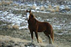 Mustang Horses; Soooooo beautiful!!!