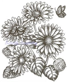 Gerbera Daisy Flowers Butterfly Wood Mounted Rubber Stamp NORTHWOODS P9492 New