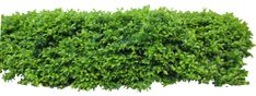 Hedge1 png by Owhl-stock