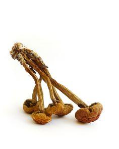little brown mushrooms   STILL (mary jo hoffman)