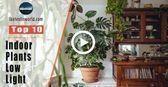 Top 10 Indoor Plants for Low Light # Bathroom Plants # Skin Care # Skin #bath#ba...#bathba #bathroom #care #indoor #light #plants #skin #top Easy Garden, Indoor Garden, Indoor Plants, Outdoor Gardens, Garden Ideas, Sansevieria Trifasciata, Calathea, Clematis, Low Light Plants