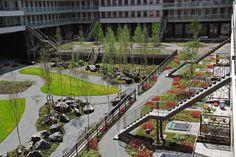 Masira roofgarden Blok C Amsterdam, Buro Sant en Co landscape architecture