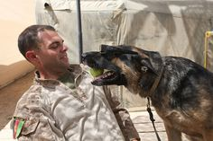 LOVE Military working Dogs!