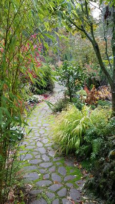 A Beautiful Cold and Wet November Garden | Fine Gardening