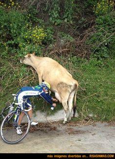 Ciclista rellenando su botellín, ordeñando la vaca.