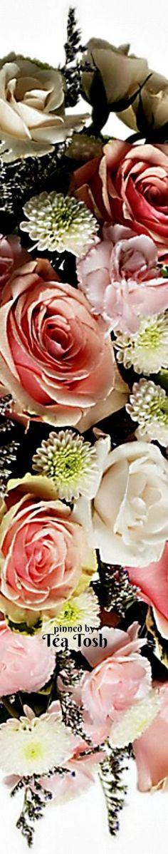 ❇Téa Tosh❇ Pretty Cotton Candy