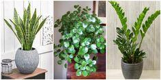 Ένα φυτό μπορεί να ανανεώσει τον χώρο και να του προσδώσει ζωντάνια και χρώμα. Θα σου δείξω 6 φυτά εσωτερικού χώρου που δεν χρειάζονται φως για να ευδοκιμήσουν. Από μικρά φυτά που μπορείς να τα τοποθετήσεις παντού, μέχρι και αυτά που έχουν πιο επιβλητική όψη, όλα είναι μοναδικά και μπορούν να μεταμορφώσουν ένα δωμάτιο με … Echeveria, Garden Plants, Home Decor, Gardening, Decoration, Google, Decor, Decoration Home, Dekoration