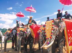 Holi and the Elephant Parade | India Tours | India Holidays | India800 x 599 | 74 KB | www.onthegotours.com