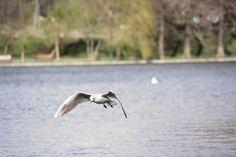 pescarusi in zbor