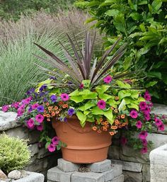Calibrochia, Wave Petunias, and Sweet Potato Vine Potted Arrangement