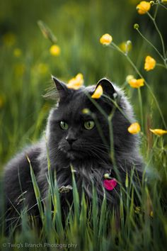 """""""Prowling his own quiet backyard or asleep by the fire, he is but a whisker away from the wilds."""" --Joan Asper McIntosh"""