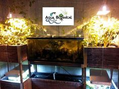Aqua Botanical indoor aquaponics system 55 Gallon fish tank.  2 grow beds on top and floating rafts on bottom for leafy salad greens.  aquabotanical.org