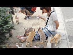 Bunnies Snuggle with Girl on Rabbit Island - http://www.nopasc.org/bunnies-snuggle-with-girl-on-rabbit-island/