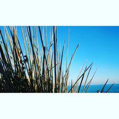 Shrubs by the sea   #sea #seaside #shrub #plants #blue #bluesky #Portugal #portugal #luz #beachlife #nature #naturelover #lovenature #travel #traveller #traveling #igtraveller #igtravel #instatravel #wandering #wanderlust #worlderlust #explore #igexplore #instaexplore #:-) #instaexplorer #exploretheworld #exploring #naturesbeauty by jacksonrachael