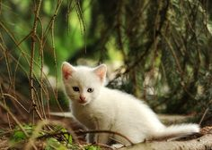 Gratis bild på Pixabay - Katt, Kattunge, Unga Djur, Vildkatt