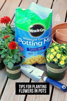 Epsom salt for plants in bangalore dating