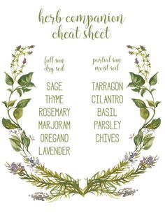 herb companion cheat sheet