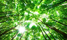 Why You Need To Try Japanese Forest Bathing
