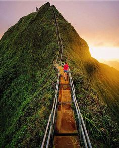 Stairway to Heaven Oahu Hawaii. Photo - @everchanginghorizon. #OurLonelyPlanet…                                                                                                                                                                                 Plus