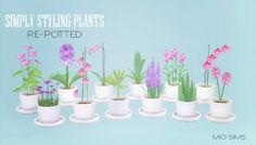 Mio Sims: Simply Styling plants