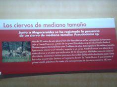 Más de 50 restos de este género han sidos descubierto en los yacimientos de Barranco León y Fuente Nueva. Se trata de un gamo evolucionado desde el Plioceno superior terminal hasta unos 2 millones de años. Es de mediano tamaño, ligeramente inferior a un venado y superior a un corzo. Puede alcanzar una altura de un metro de cruz y un peso que oscila entre 50-90 kilos.