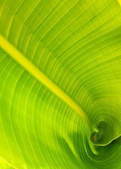 Fine Art Nature Photograph Green Leaf Photo by SnapCracklePrint