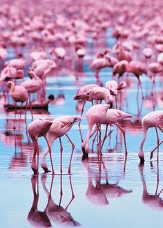 Pink Flamingos EVERYWHERE!