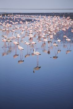 The flamingos of Walvis Bay, Namibia Salt Stone, Namib Desert, Beautiful Places, Amazing Places, Places Of Interest, Africa Travel, Great Photos, The Good Place, Travel Inspiration