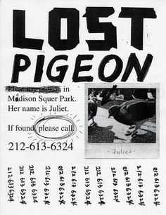 Lost Pigeon : Office of Joon Mo Kang Pigeons are like winged rats in NYC.