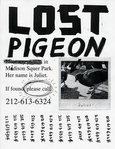 Lost Pigeon : Office of Joon Mo Kang
