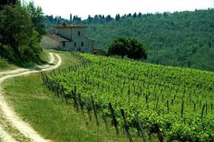 Holiday rental villas and vacation accommodation in Italy : Tuscany : Chianti Chianti Wine, Toscana Italia, Tuscan House, Italy Tours, Shore Excursions, Italian Wine, Wine Country, Vineyard, Beautiful Places
