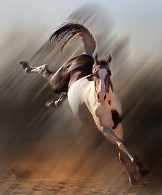 2 Kickin' Up_©SQByrd_6x5@150.jpg Susan Q Byrd horse art