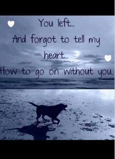"""""""You left and forgot to tell my heart how to go on without you"""" - Modern Animal Quotes, Dog Quotes, Dog Heaven Quotes, Pet Loss Grief, Dog Grief, Losing Your Best Friend, Rare Albino Animals, Dog Poems, Drama Funny"""