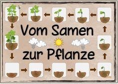 """Themenplakat """"Vom Samen zur Pflanze"""" Wieder ist ein neues Themenplakat fertig. Viel Freude mit dem Plakat """"Vom Samen zur Pflanze""""!"""