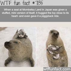 Fun Fact Dump for your Dump - Imgur