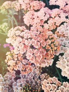 Spring flora - Wildthorne on Instagram