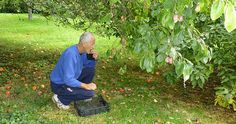 Foraging around the Fruit Trees