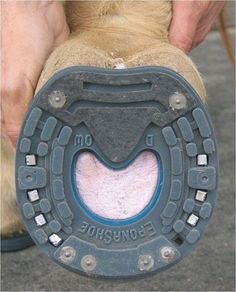 Eponashoe, the next best option for horses in situations where they need protection of the hoof or for certain rehabilitation purposes..