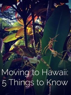 Island mindset and realities: if you want to go from thinking about moving to Hawaii to actually making a plan, here are 5 basic things to know. Visit Hawaii, Aloha Hawaii, Hawaii Life, Hawaii 2017, Hawaii Honeymoon, Hawaii Vacation, Hawaii Travel, Vacation Destinations, Vacation Spots