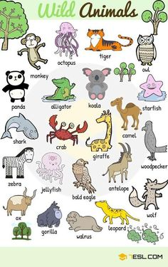 Learn animals vocabulary/ animal names through pictures. Everybody loves animals, keeping them as pets, seeing them at the zoo or visiting … wild Animal Names: Types of Animals with List & Pictures Learning English For Kids, English Worksheets For Kids, English Lessons For Kids, Kids English, English Activities, English Language Learning, Teaching English, English Tips, French Lessons