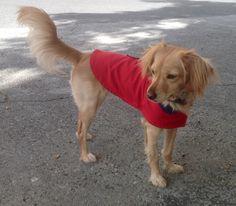 Chaqueta de perro reversible rojo y azul, con inicial nombre, chaleco perro, ropa perro. Diseño exclusivo de Mucka Pets. de MuckaPets en Etsy