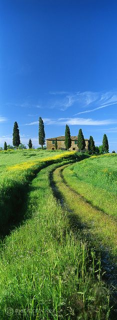 Up the garden, Tuscany, Italy