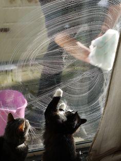 Dat's fun! We luvs window washing day. お掃除。