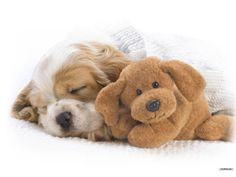 We provide complete professional grooming services for dogs and cats. Regular grooming keeps a dog clean and healthy