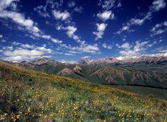 Continental Divide Trail-Montana.