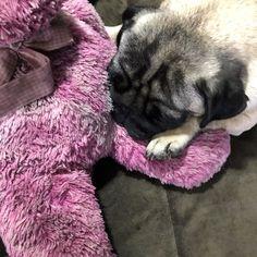 #fofura #pug #lover #pugdogs #dog_features #linda #cachorro #  #fofura #pug #lover #pugdogs #dog_features #linda #cachorro # pug dogs pets Pugs, Animals, Diy Dog, Animales, Animaux, Animal Memes, Pug, Pug Dogs, Animal