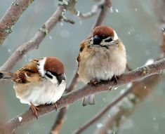 Cute Birds, Pretty Birds, Small Birds, Colorful Birds, Beautiful Birds, Animals Beautiful, Cute Little Animals, Little Birds, Sparrow Bird